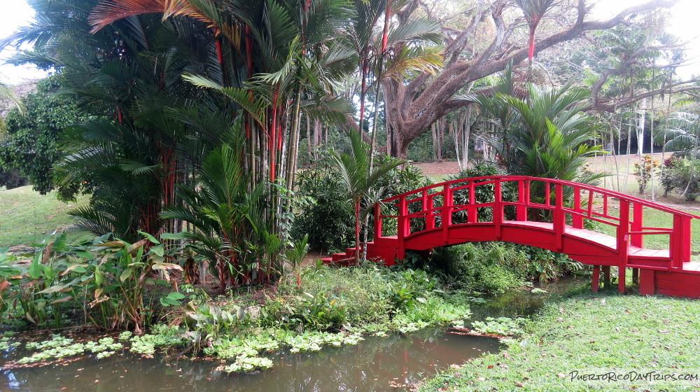 Passing some time in the Botanical Garden / Jardin Botanico ...