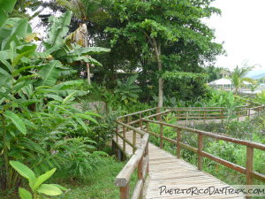 History and nature at the caguas botanical garden puerto for Jardin xanadu puerto rico