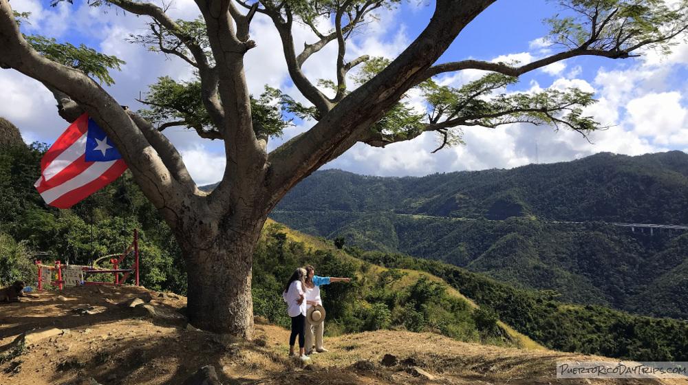 Curva Del Arbol Renace In Salinas Puerto Rico Day Trips