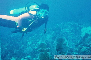 Diving at Desecheo Island