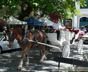 Old San Juan Horse Carriage Tour