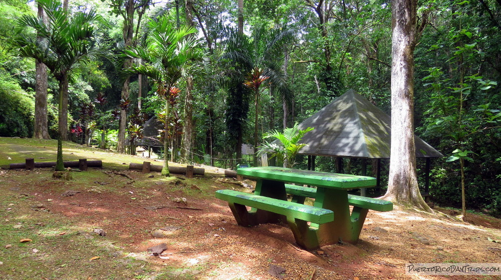 Camping Area in Rio Abajo Forest