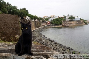 Save A Gato in Old San Juan