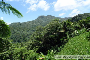 South side of El Yunque National Forest