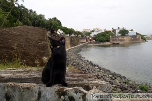 Feral Cats in Old San Juan
