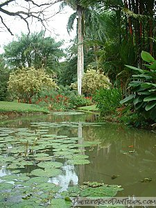 Beautiful UPR Botanical Garden