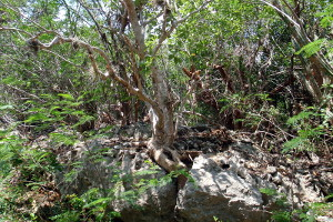 Guanica Dry Forest