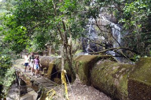 Waterline Trail in El Yunque